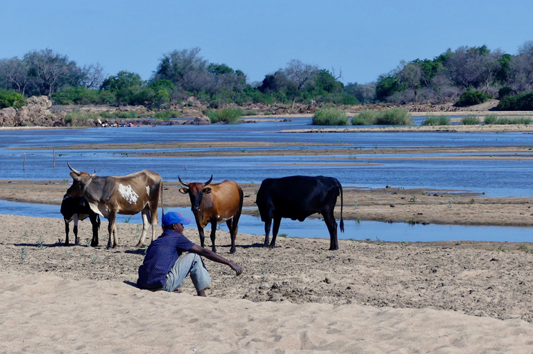 Cattle_Herder_River2.jpg